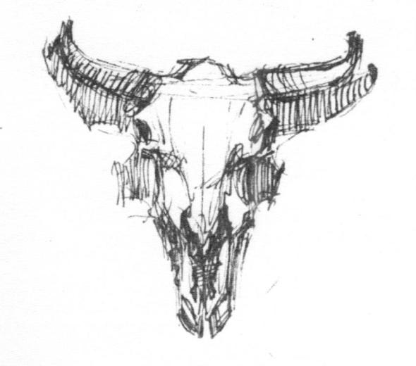 sketch of cow skull Dixon #6 001